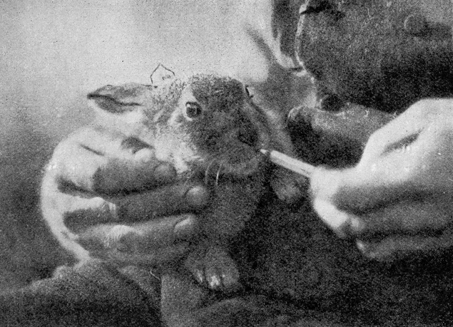 01-Feeding-the-Baby-Hare-360